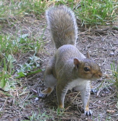 Did you say nuts?
