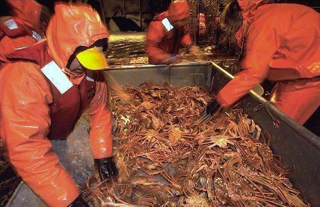Opilio Crab Processing